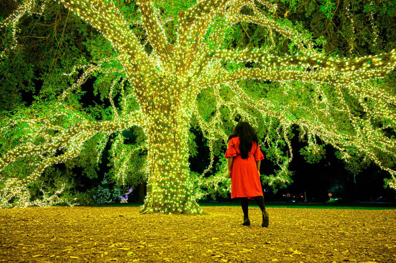 mila clarke buckley in front of Houstonian Hotel Tree