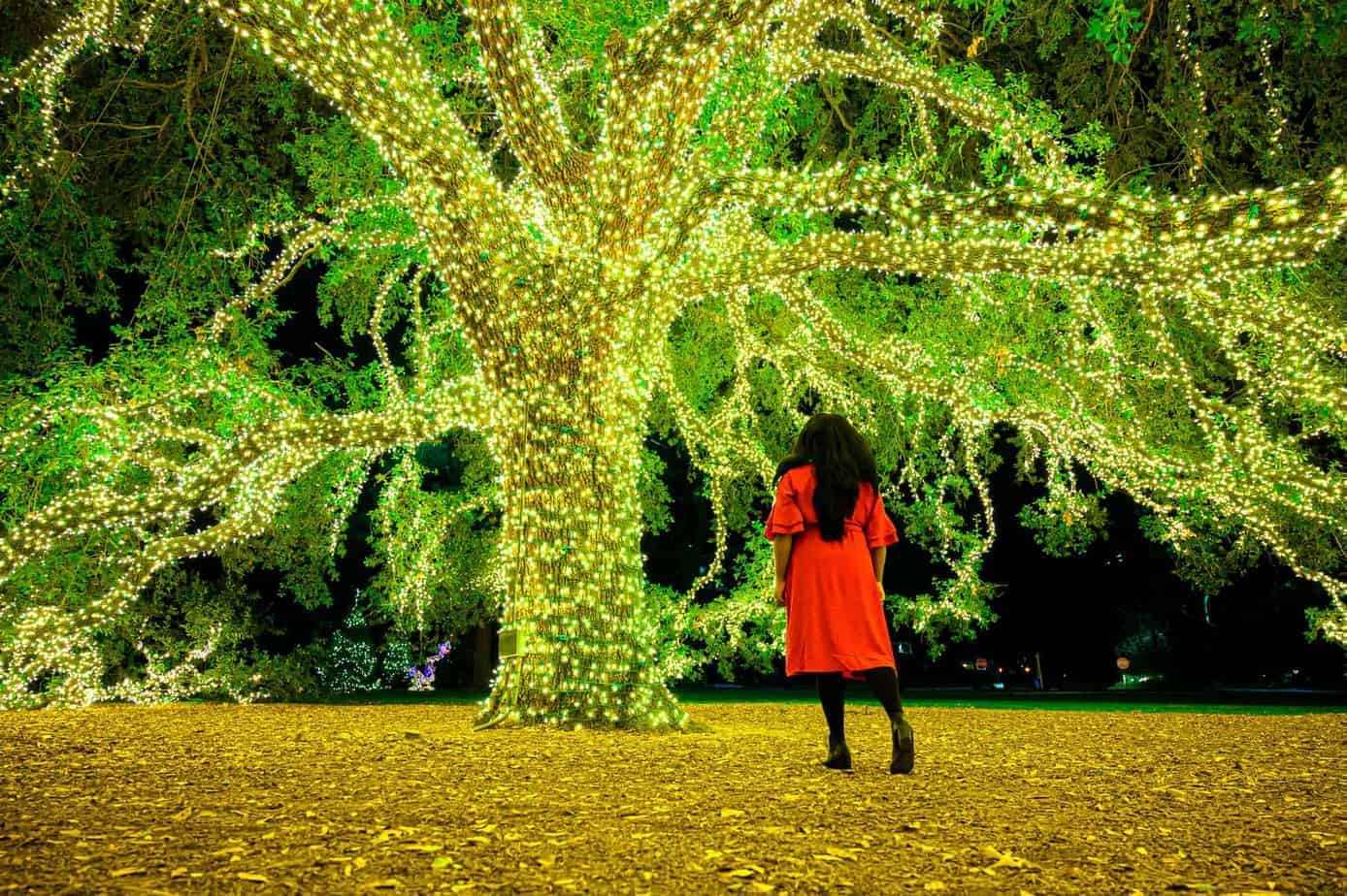 mila clarke buckley in front of Houstonian Hotel Tree