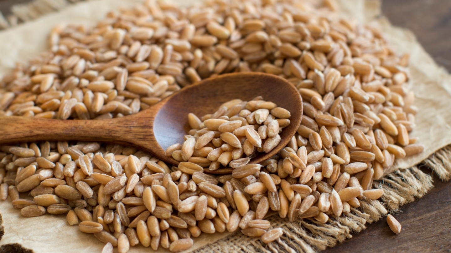 farro on a spoon